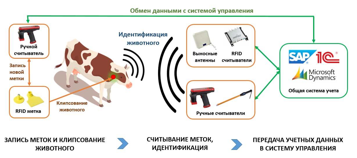 Идентификация животных 1