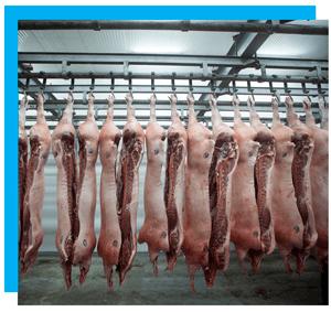 автоматизация мясокомбината